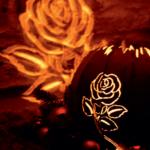 Kugel Rose2