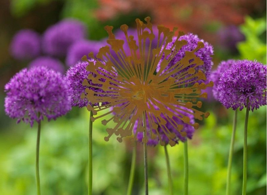 allium beetstecker aus metall, gartenstecker rost deko - rost deko, Design ideen