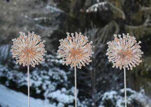 Rost und Schnee Allium freistehend